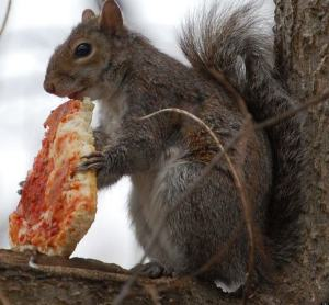 o-SQUIRRELS-EATING-PIZZA-facebook